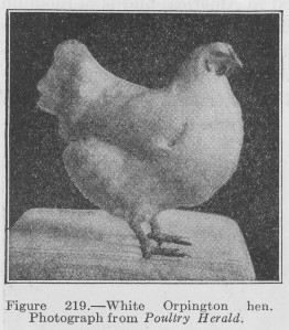 The Feeding of Poultry…a 1924 Perspective – 3/2/12