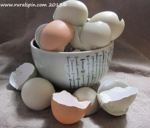 Eggshells can be ground in a blender and used for many purposes, indoors and out.