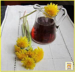 Dandelion tea oxidizes from yellow to a lovely russet color with time. This does not affect the taste of the jelly.